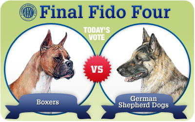 The Final Fido Four Championship Round: Boxers vs. German Shepherd Dogs