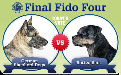 The Final Fido 4: German Shepherd Dogs vs. Rottweilers