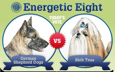 The Energetic 8: German Shepherd Dogs vs. Shih Tzu
