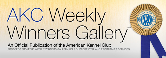 AKC's Weekly Winners Gallery