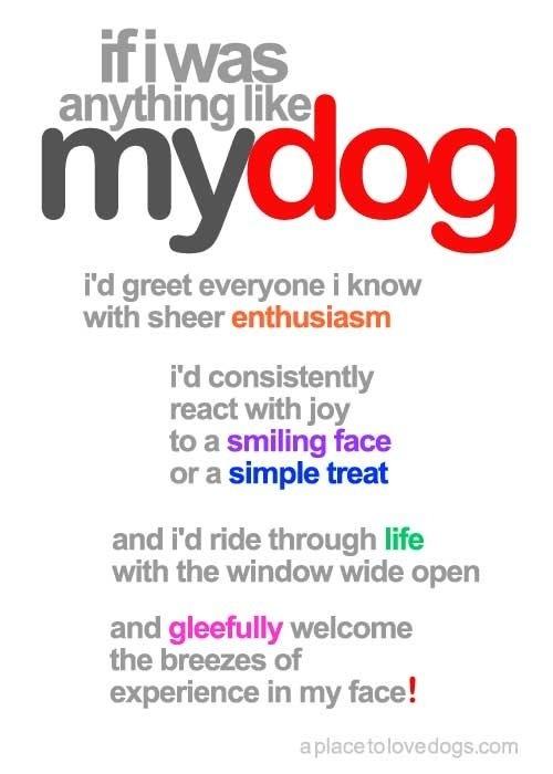 if i was like my dogDONE