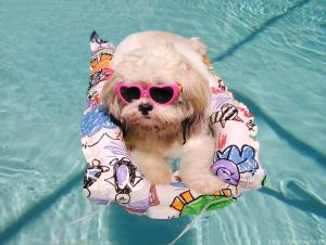 dog in poolDONE