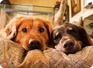 cute-dog-dogs-friends-Favim.com-590509