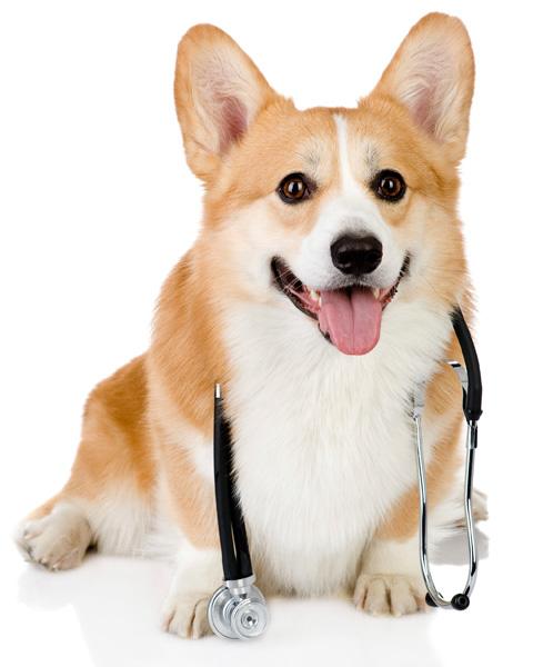 drdoggie