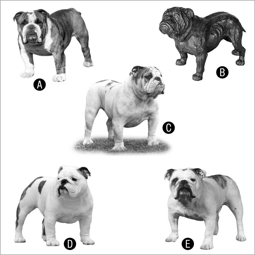 5_bulldogs