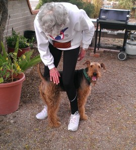 Casey_Airedale