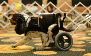 Rescue Abby and her cart at the National