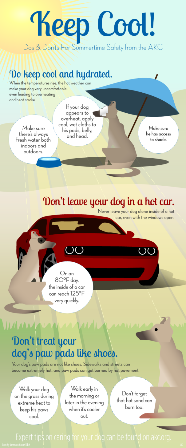 Help keep your dog safe this summer!