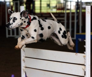 Here's one athlete who will never dog it.
