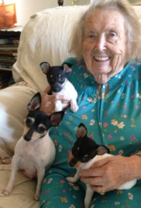 Eleanor Alford, age 94, with her constant companion, Toy Fox Terrier Skippy Lou, and Skippy's two puppies.
